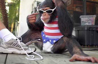 alpha monkey